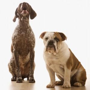 Hunde bekanntschaften